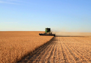 Avoid Soybean Loss During Harvesting, Drying, Storage